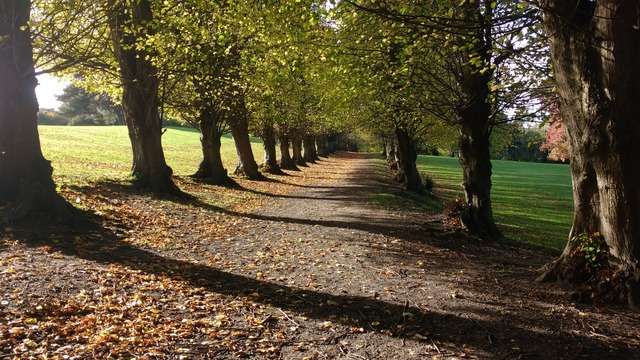 west-end-hatch-grange-avenue-of-trees-img_20171025_111123280